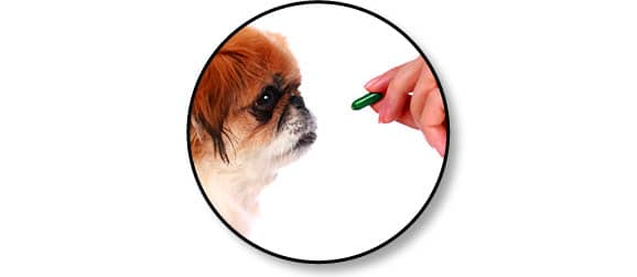 administrer_comprime_chien
