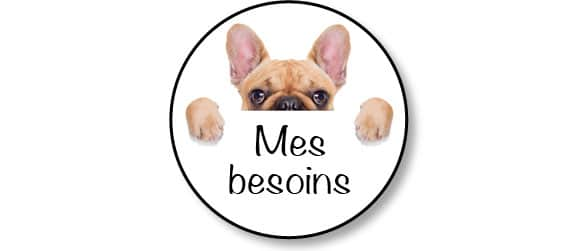 adopter-adoption-chiot-chien-besoins