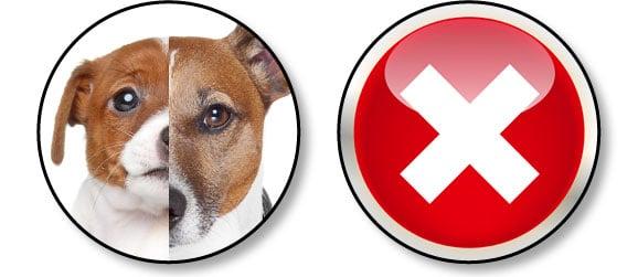 adopter-un-chiot-et-pas-chien