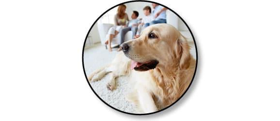 adoption-chien-adulte-famille-conseil-veterinaire