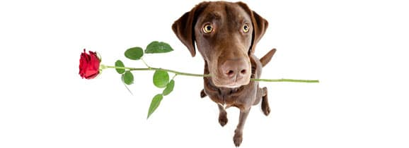adoption_chien_adulte
