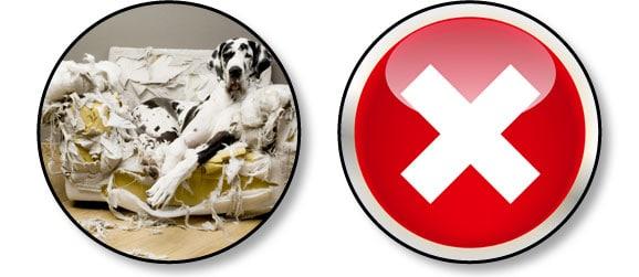 adpoter-un-nouveau-chien-destruction