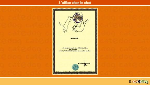 affixe_nom_chat