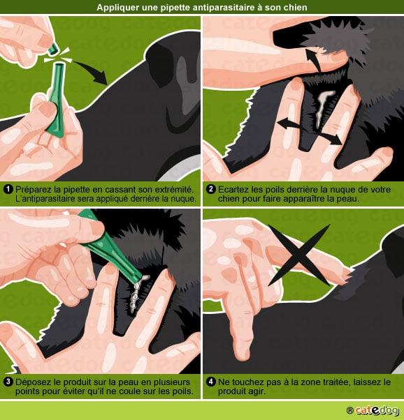 appliquer-pipette-antiparasitaire-tique-puce-chien
