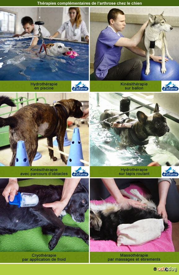 arthrose-chien-hydrotherapie-kinesitherapie-physiotherapie-massage