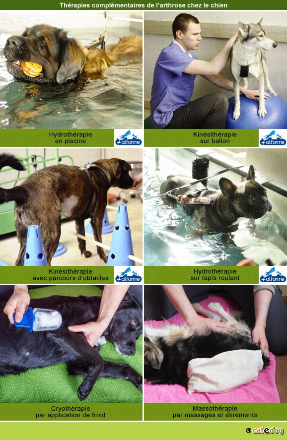 arthrose-chien-hydrotherapie-kinesitherapie-physiotherapie-massage