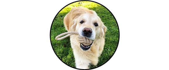 balle corde à nœud à mastiquer pour chien