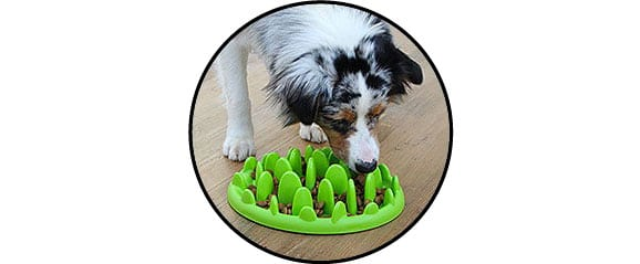 plateau gamelle anti glouton pour le chien obèse