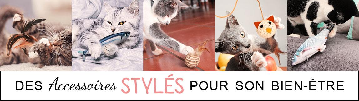 Boutique en ligne d'accessoires pour chat et chaton
