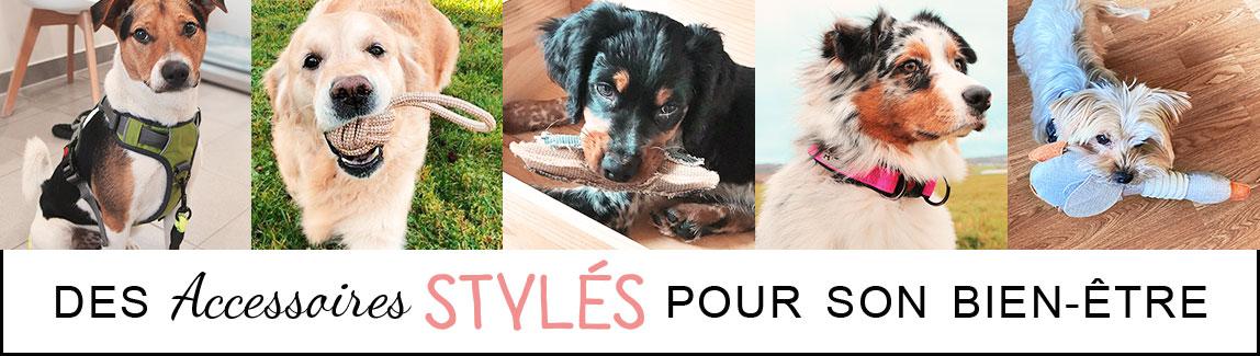Boutique en ligne d'accessoires pour chien et chiot