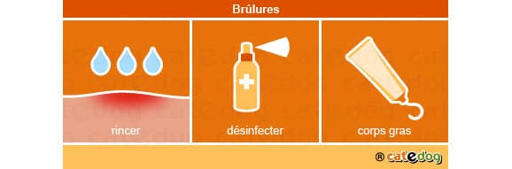 brulures_chat