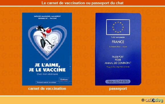 carnet-vaccination-passeport-veterinaire-chat-catedog
