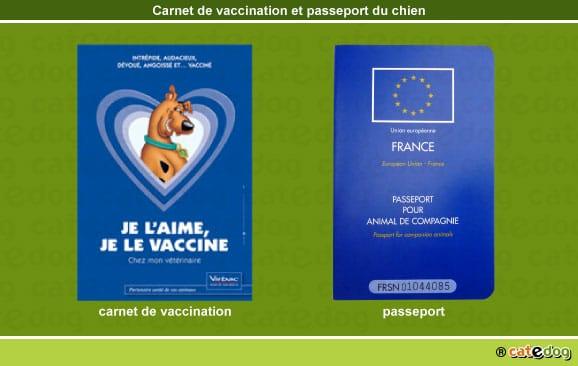 carnet_vaccination_passeport_chien