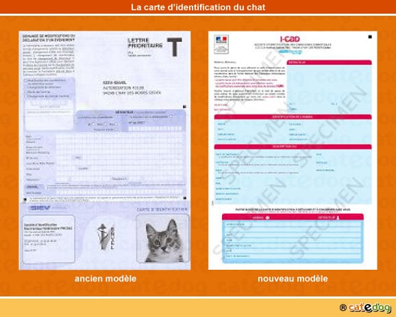 carte-identification-chat