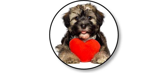 castration-sterilisation-chien