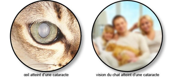 cataracte_chat