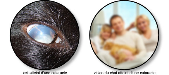 cataracte-chat