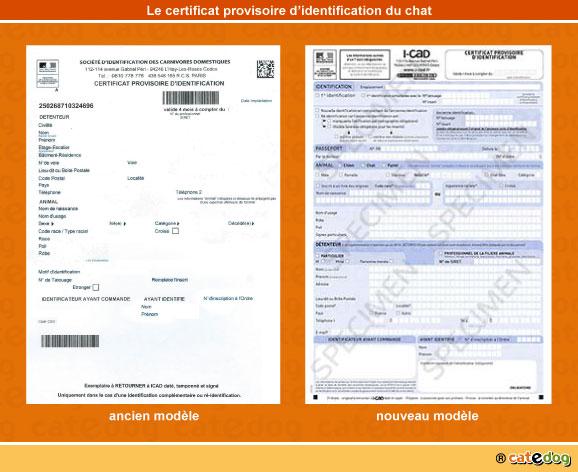 certificat-provisoire-identification-chat