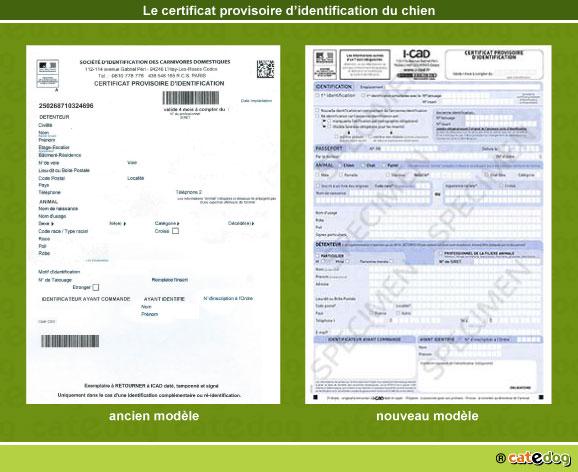 certificat-provisoire-identification-chien