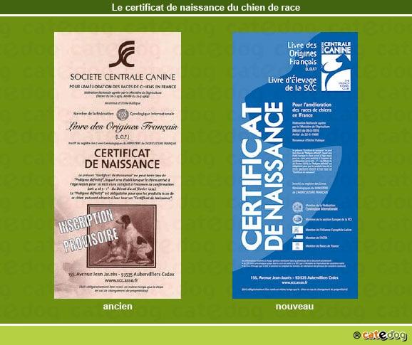 certificat_naissance_chien