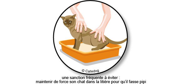 chat-fait-pipi-litiere-pisse-urine
