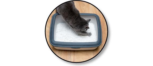 Conseils de litière pour le chat qui fait pipi partout