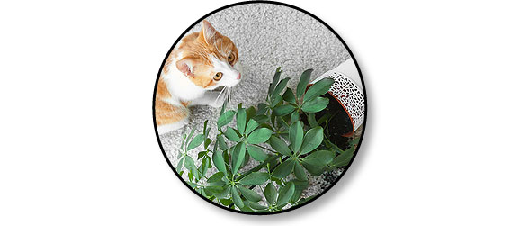 chat-fait-pipi-pisse-terre-plante