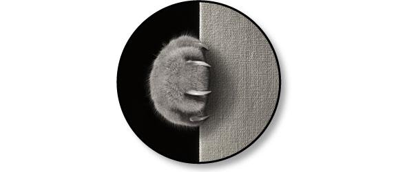 chat-griffe-partout-canape-lit-tapis