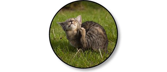 chat-larve-aoutat-herbes-gratte