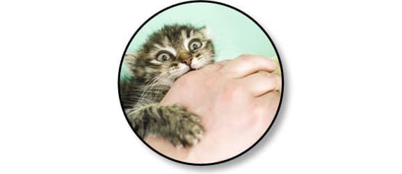 chat-peur-comportement-mordre-mord-mordille