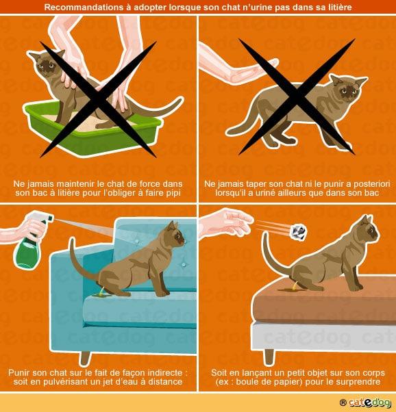 chat-urine-pipi-partout-lit-canape