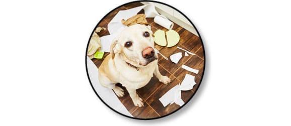 Mon chien détruit tout ou fait des bêtises
