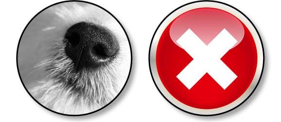 chien-possede-un-sens-gustatif-developpe