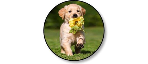 chien-creuse-jardin_education