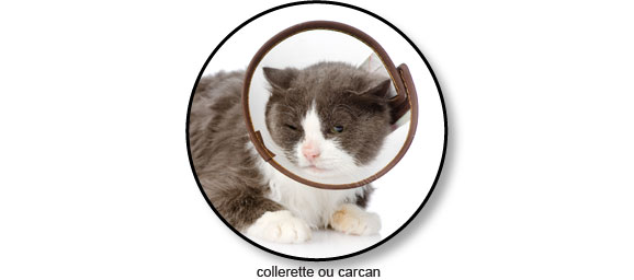 collerette-carcan-chat-conjonctivite-oeil
