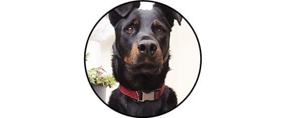 Collier en tissu avec clip pour chien