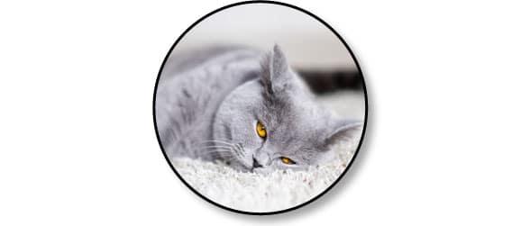 comportement-chat-fait-griffes-calme