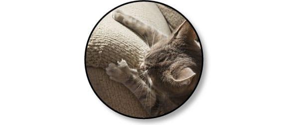 comportement-chat-fait-ses-griffes