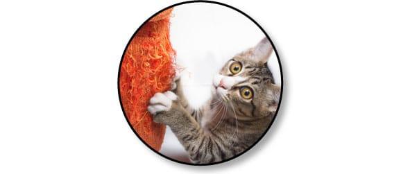 comportement-mon-chat-fait-griffes
