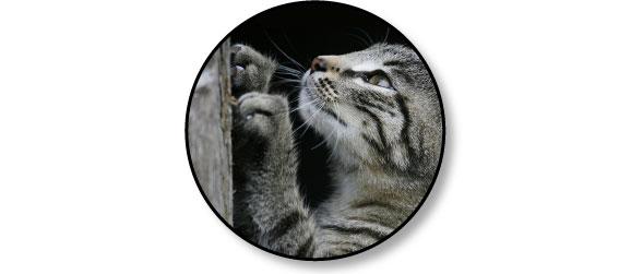 comportement-mon-chat-fait-ses-griffes