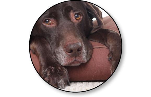 comportement_chien_age