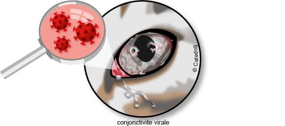 conjonctivite-virale-virus-chat