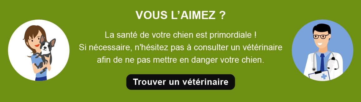 Conseil vétérinaire pour le chien