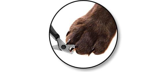 couper_griffes_chien