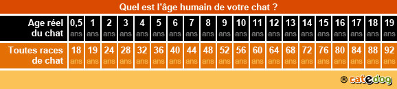 definir_vieillissement_age_chat