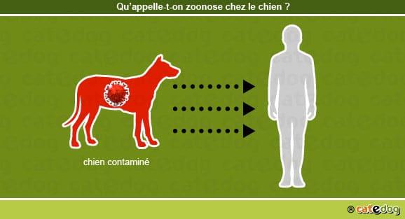 definition_zonoose_chien