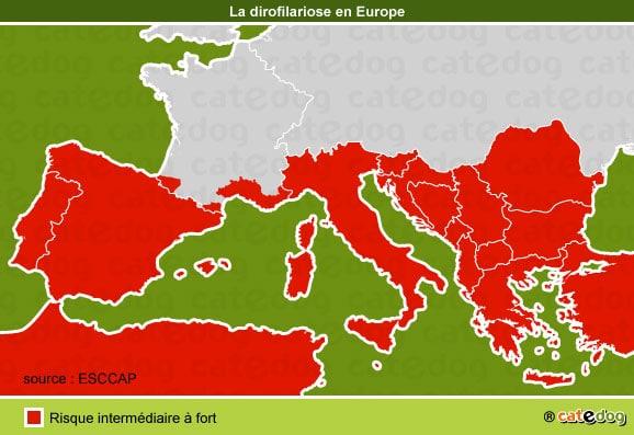 dirofilariose-chien-canine-europe