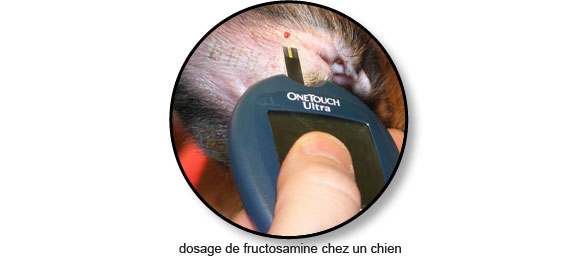 dosage-fructosamine-diabete-chien