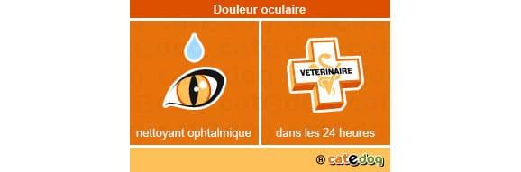 douleur_oculaire_chat