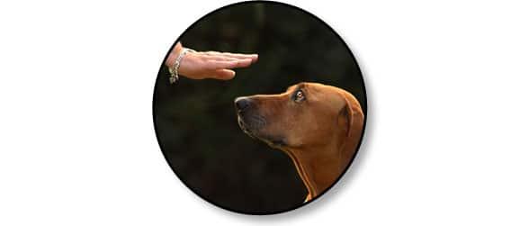 etre-a-ecoute-chien